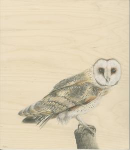 big barn owl